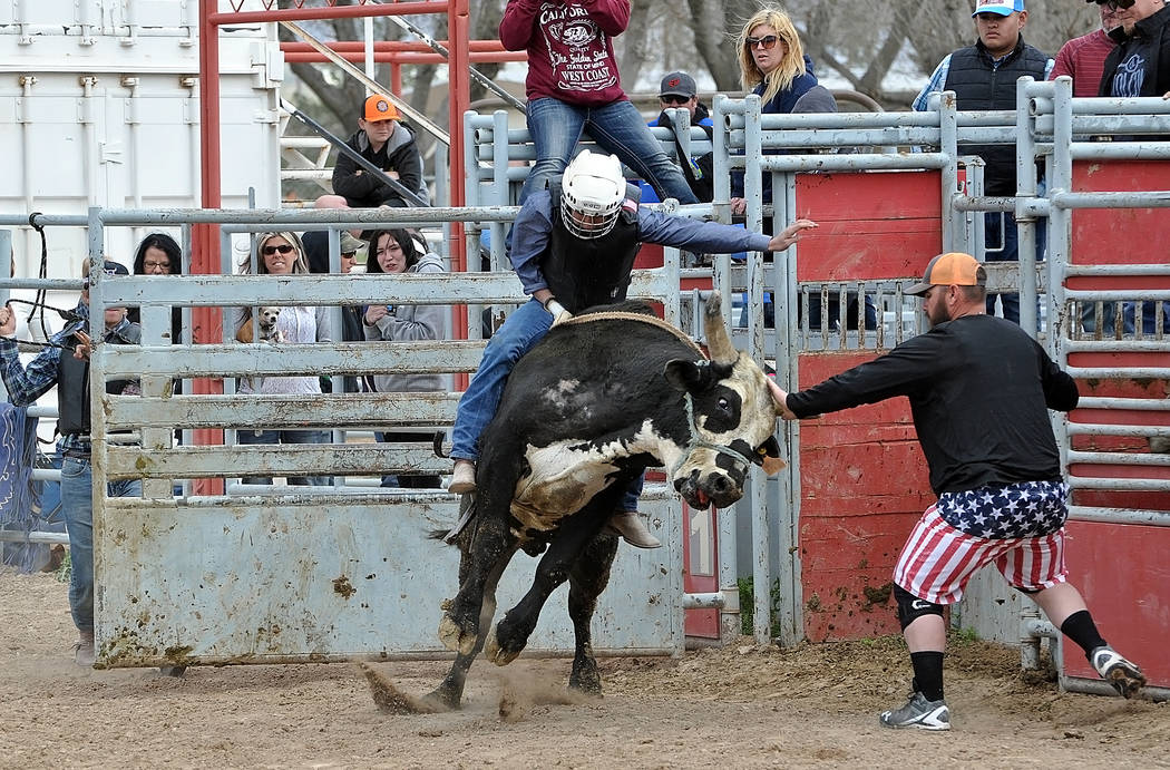 The high school rodeo is back. A Bull rider, 15-year-old Ty Hardy gets his chance on a 2,000-pound bull. See full story on Wednesday. Horace Langford Jr. / Pahrump Valley Times