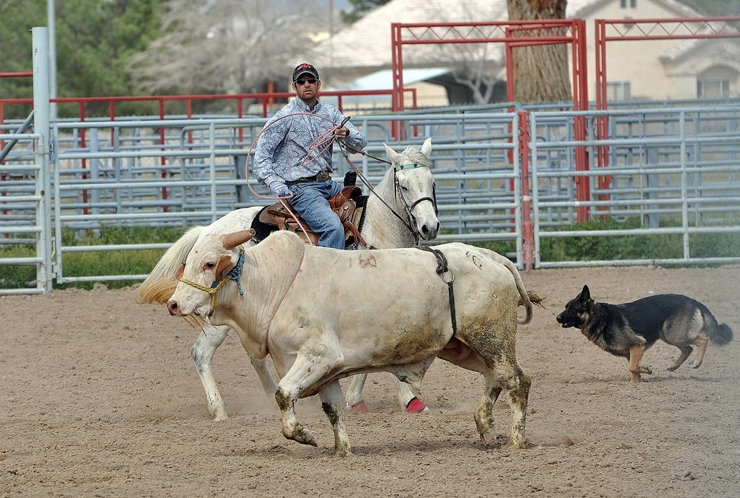 Robert Tibbits chases down a bull for the team with help from Bella, the bull chasing dog on March 5. Bull riders have returned to Pahrump in the form of high school rodeo, which will do its first ...