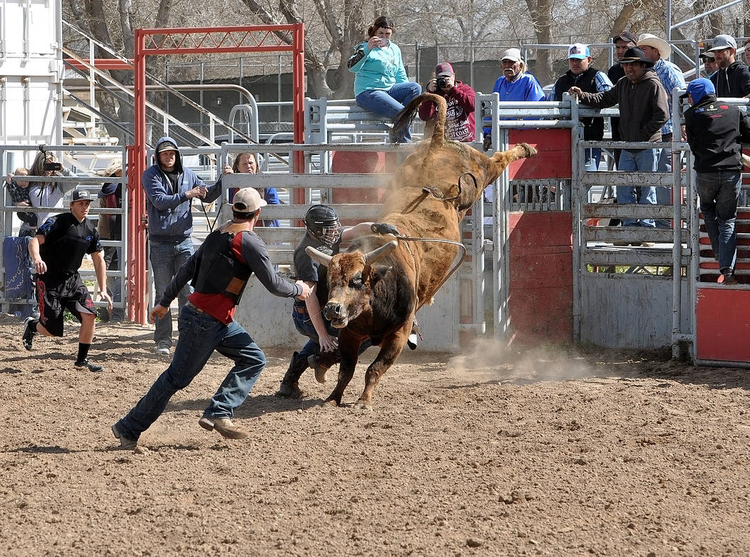 Horace Langford Jr. / Pahrump Valley Times  Alex Justin has problem staying on the bull during a Trojans rodeo club practice earlier in March. The rodeo team will be having a fundraiser at the Hub ...