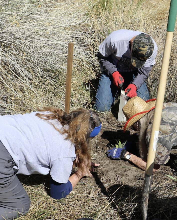 Volunteers plant nectar plants Saturday as part of a project aimed at attracting migrating monarch butterflies and other pollinating insects to the Nature Conservancy's Torrance Ranch Preserve, 12 ...