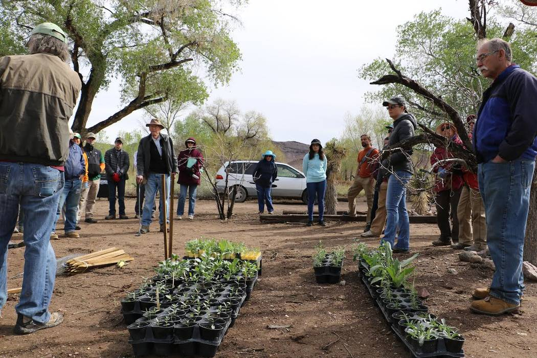 "Volunteers listen to a briefing Saturday before planting a ""pollinator way station"" for monarch butterflies at the Nature Conservancy's Torrance Ranch Preserve, 125 miles northwest of Las Vegas.   ..."