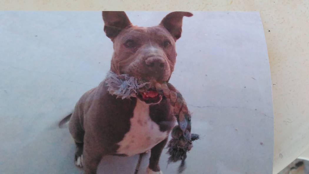 False residential alarm leads to fatal shooting of dog in Nye County