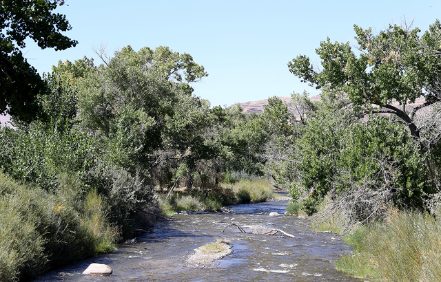 Nevada Department of Conservation & Natural Resources The Walker River State Recreation Area will add more than 12,000 acres to Nevada's state parks with land donated from the Walker Basin Res ...