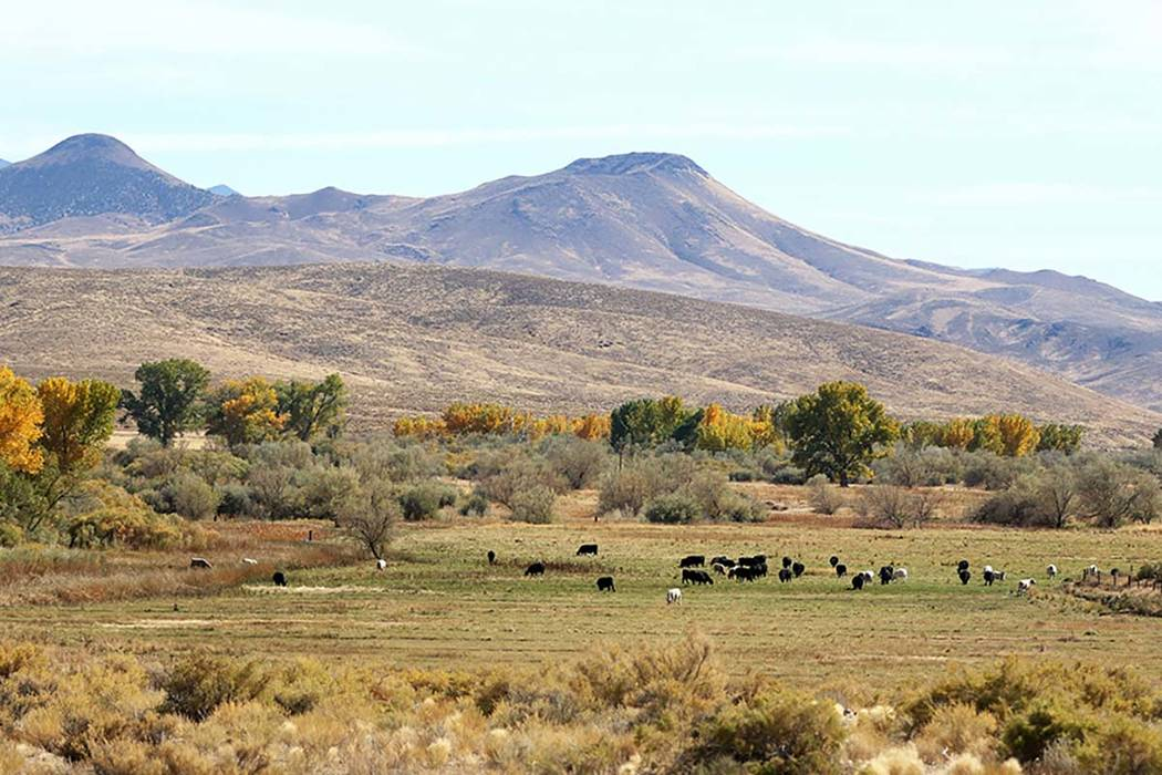 Nevada Department of Conservation & Natural Resources The Walker River State Recreation Area will add more than 12,000 acres to Nevada's state parks with land donated from the Walker Basin R ...