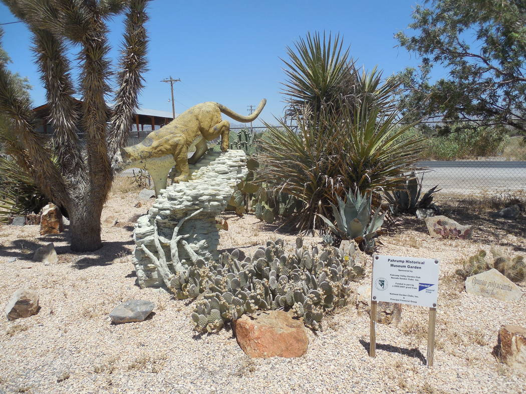 Pahrump Valley Museum/Courtesy photo Excellent native plant garden with cougar guarding it.
