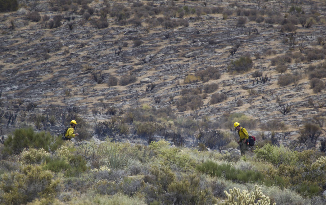 Firefighters look for hotspots at a wildfire burning on the Pahrump side of Mount Potosi southwest of Las Vegas on Friday, July 7, 2017.  (Richard Brian Las Vegas Review-Journal) @vegasphotograph