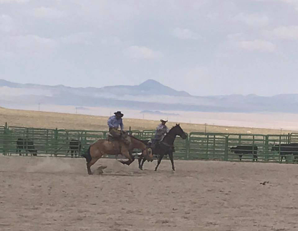 Kat Galli/Town of Tonopah Bucking horses stomped the dirt at the Tonopah Rodeo Grounds on July 15-16.