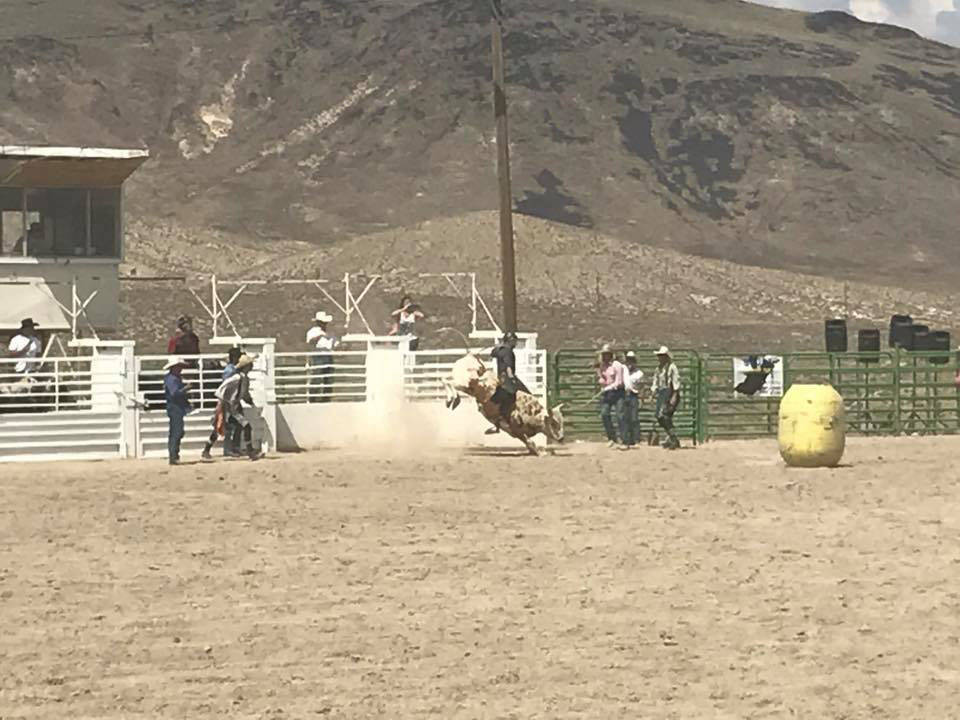 Kat Galli/Town of Tonopah Bull riders try to hang on and take the prize at the Tonopah Rodeo Grounds July 15-16.