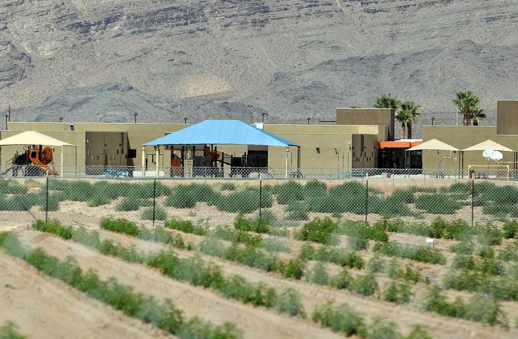 Horace Langford Jr./Pahrump Valley Times -  Hemp farm owned by Dan Harris is right next to Manse Elementary School, which can be seen in the background and is perfectly legal.