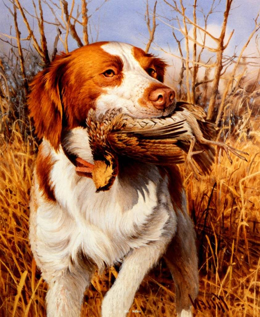 Special to the Pahrump Valley Times A painting of a Brittany Spaniel hunting dog by Jim Killen. Killen is a master of depicting the sporting dog.