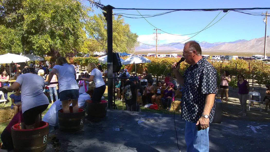 Selwyn Harris/Pahrump Valley Times  Pahrump Valley Winery owner Bill Loken engages the crowd during the annual Grape Stomp on Saturday. The two-day event drew hundreds of attendees, some of which  ...