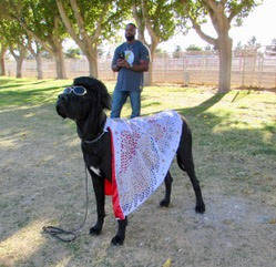 Mary Foley/Special to the Pahrump Valley Times Elvis Whittle (front) is a 21-month-old great Dane, owners Wendy and Dax Whittle, members of the Pahrump Valley Obedience Club PVOC, dressed for a Ha ...