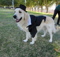 Mary Foley/Special to the Pahrump Valley Times    Charlie was entered into a Halloween costume contest during the 10th Annual Obedience & Rally Trials at Petrack Park on Oct. 28, 2017. Charlie ...