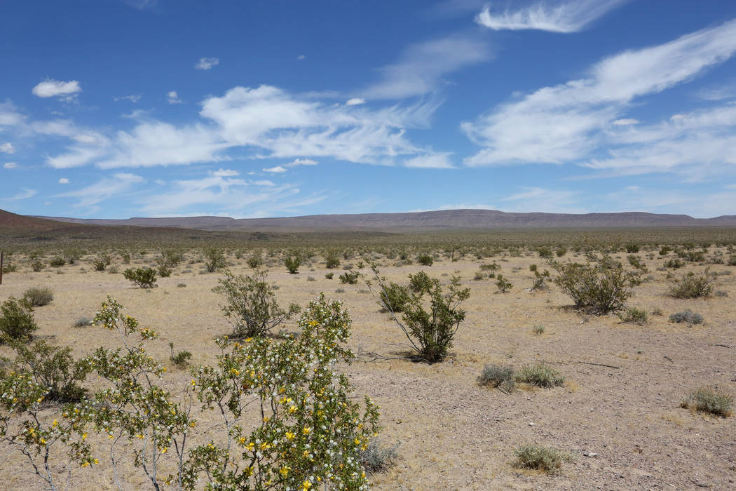 Michael Quine Las Vegas Review-Journal @Vegas88s Yucca Mountain, the proposed site for a nuclear waste repository, is seen from Crater Flat where dormant cinder cone volcanos dot the desert floor, ...