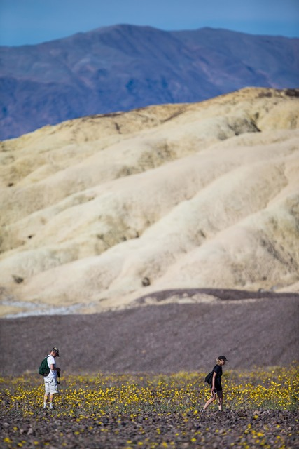 """While visiting Death Valley National Park during the wildflower bloom, New Yorker music critic Alex Ross """"listened to Death Valley as he would a symphony and took in all the notes that harmonize t ..."""