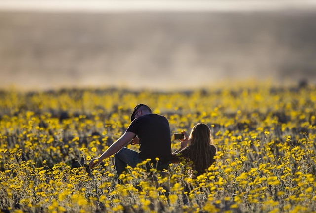 People sit among the wildflowers along Badwater Road in Death Valley National Park on Saturday, Feb. 27, 2016. Chase Stevens/Special to the Pahrump Valley Times