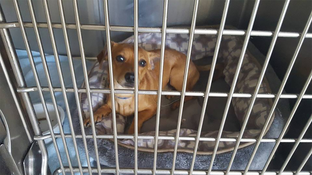 Nye County Animal Control officers rescued more than a dozen dogs after Monday's Fourth of July fireworks celebration throughout town. Desert Haven Animal Society has a Facebook page with images ...