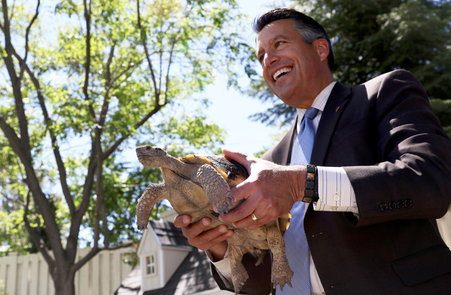 Governor Brian Sandoval recently adopted Carson through the Tortoise Group, a nonprofit organization based in Las Vegas which promotes and protects the well-being of desert tortoises. The group al ...