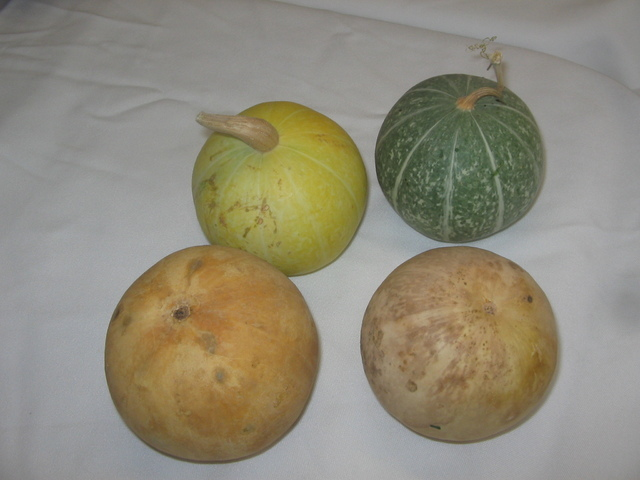 Gourds grown by gourd artist Sherry Rhine prior to her cleaning and prepping them for painting. Brenda M. Klinger/Special to the Pahrump Valley Times