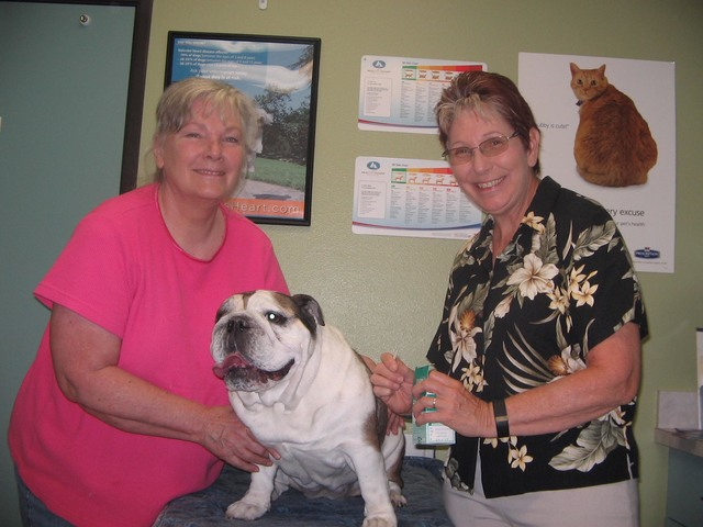 Louise Bruchman with her old English bulldog, Tilly, undergoing acupuncture treatment for her breathing problems with Dr. Holly Henseler, certified veterinary acupuncturist at Desert Pet Acupunctu ...