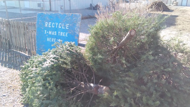 Stacks of fresh Blue Spruce and Douglas Fir trees begin to pile up at the University of Nevada Cooperative Extension property at 1651 E. Calvada Blvd. this week. The agency is again accepting the  ...