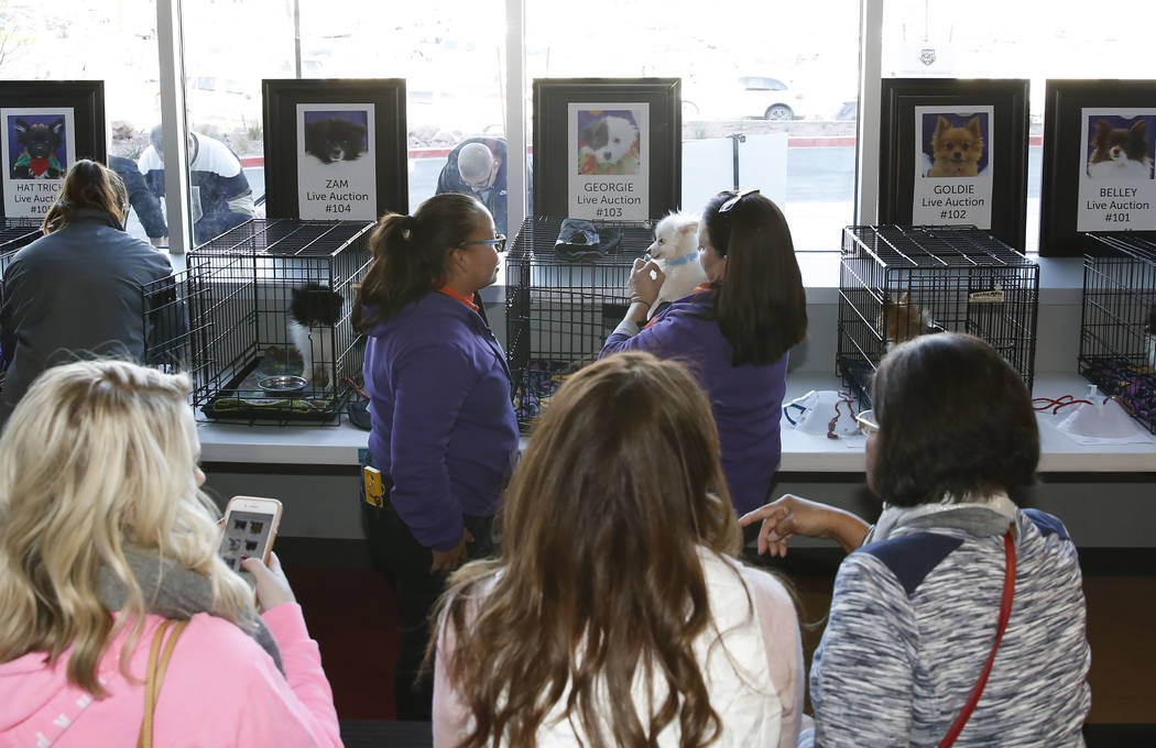 People watch as volunteers and Mary Gallagher, right, of the Animal Foundation, display Pomeranian dogs at City National Arena Monday, Dec. 18, 2017, in Las Vegas. The Vegas Golden Knights and the ...