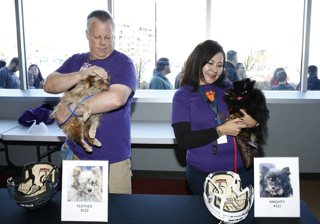 Tim Tyler, left, and Patricia Montes hold Feather and Knighty at City National Arena Monday, Dec. 18, 2017, in Las Vegas. The Vegas Golden Knights and the Animal Foundation held a Pucks for Paws c ...