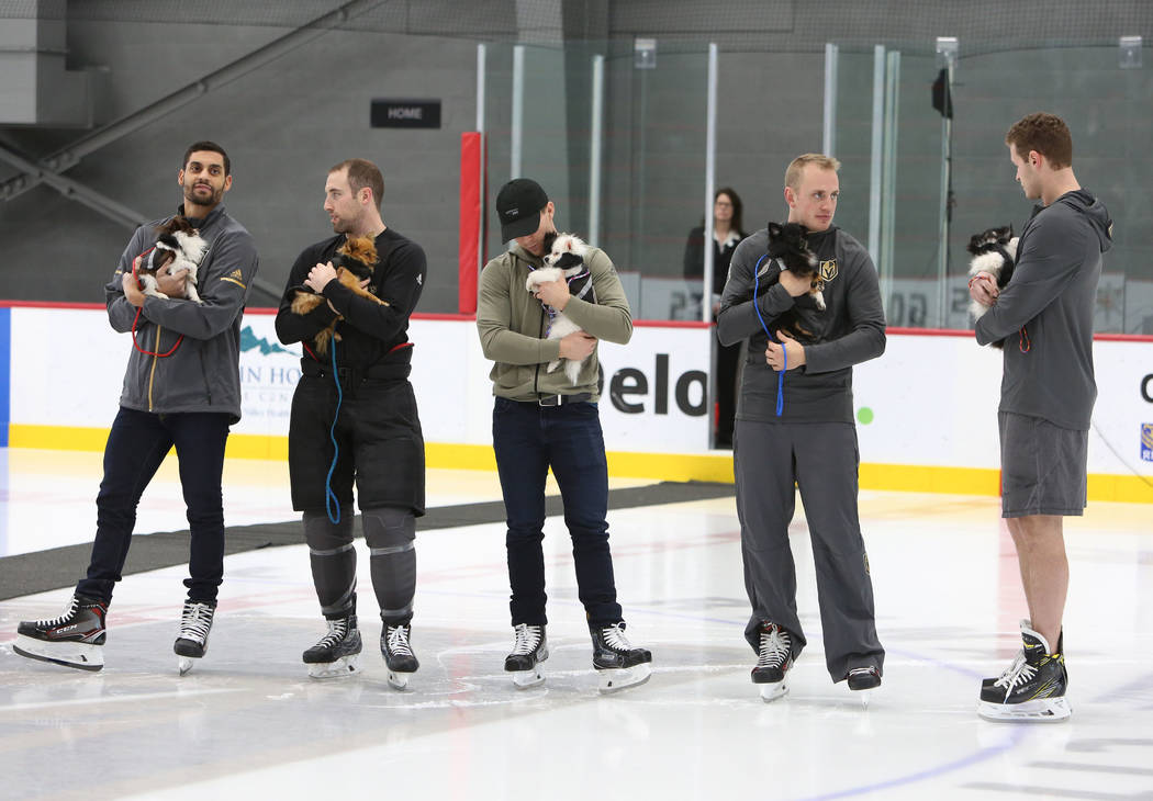 The Vegas Golden Knights Pierre-Edouard Bellemare, left, Brad Hunt, Jonathan Marchessault, Nate Schmidt, Brayden McNabb, right, hold Pomeranian dogs during the auction at City National Arena Monda ...