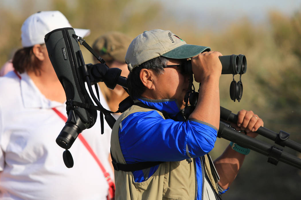 Brett Le Blanc/Las Vegas Review-Journal Doug Chang, center, president of the Red Rock Audubon Society, leads a guided bird watching walk earlier this year in Southern Nevada. A federal survey find ...