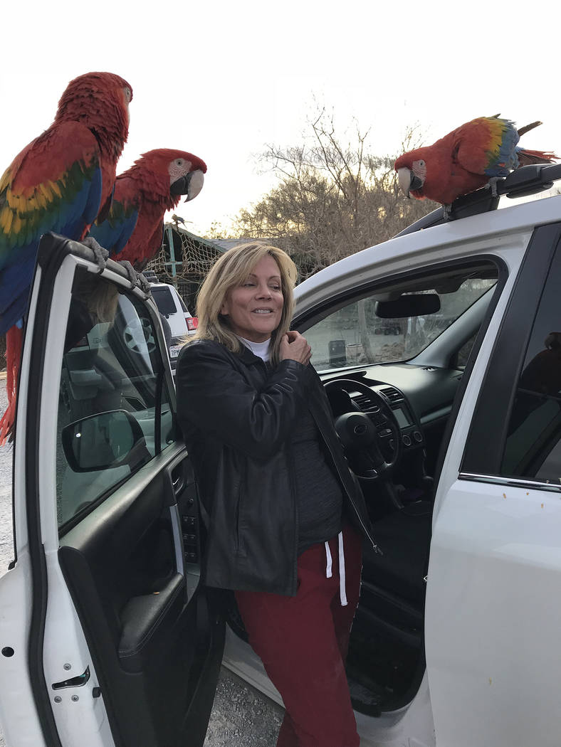 Special to the Pahrump Valley Times Pahrump resident Heidi Fleiss' pet parrot Jesse, top right, clowns for Fleiss' friend Lehua Reid, who assists with Fleiss' collection of exotic birds. Jesse's d ...
