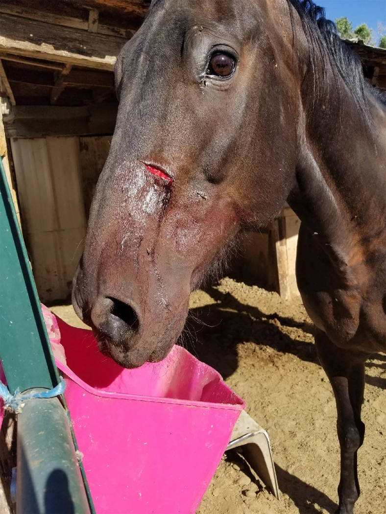 Special to the Pahrump Valley Times A total of nine horses that were seriously injured in an attack at the Big Pine Saddle Club in Inyo County early last month. A reward of more than $18,000 has s ...