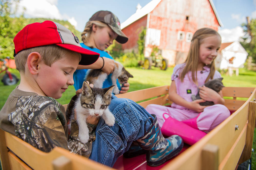 Special to the Pahrump Valley Times Children enjoy an afternoon of cuddly interaction at a Tractor Supply Out Here With Animals event. Photo courtesy of Tractor Supply.
