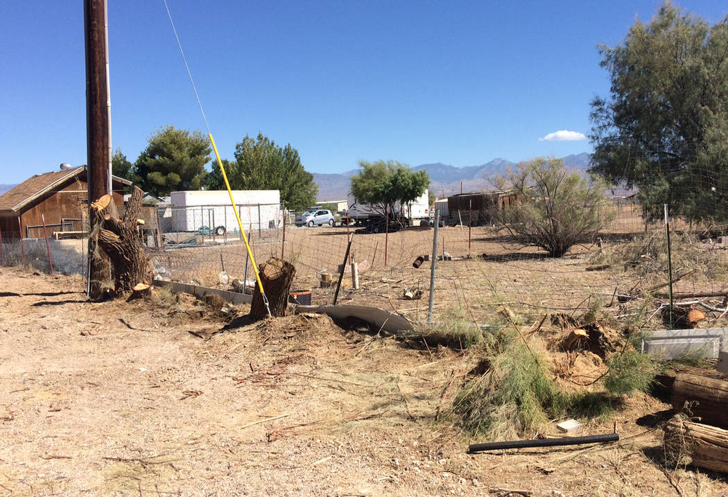 Robin Hebrock/Pahrump Valley Times Evidence of the major salt cedar removal being undertaken at West Star Ranch is easily spotted throughout the property.