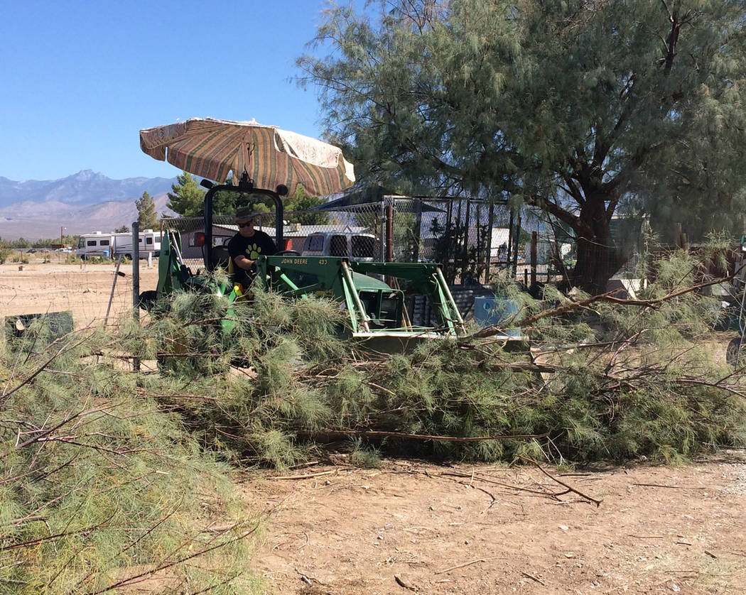 Robin Hebrock/Pahrump Valley Times Terry Dougherty of West Star Animal Rescue mans a tractor, carefully maneuvering the limbs that have been removed from salt cedars out of the yard to prepare for ...