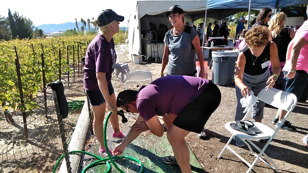 Selwyn Harris/Pahrump Valley Times Grape stomp competitors get hosed down after their respective rounds of stomping. Winery owner Bill Loken said visitors came as far as Miami, North Carolina, and ...