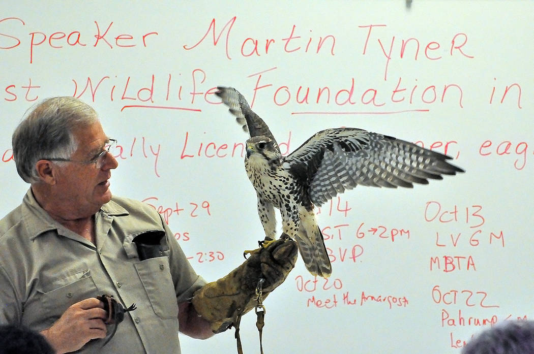 Horace Langford Jr./Special to the Pahrump Valley Times Martin Tyner, a wildlife rehabilitator at Cedar City, Utah-based Southwest Wildlife Foundation, holds Piper, a prairie falcon, at Great Basi ...