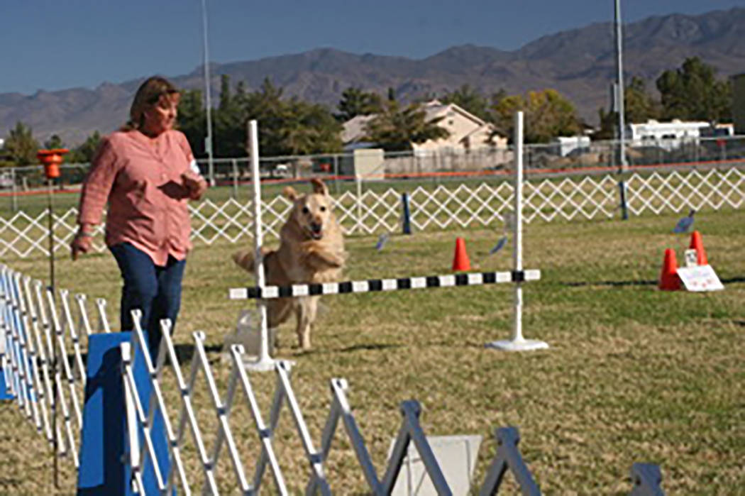 Special to the Pahrump Valley Times Seti, a golden retriever, in clears a hurdle during the rally exercise. Seti is joined by owner Kristie Rasmussen who arrived in Pahrump from Draper, Utah
