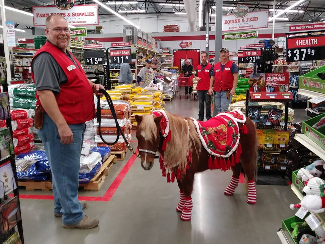 DiAnna Frey-Johnson/Special to the Pahrump Valley Times Mark Slingerland, store manager for the Pahrump Tractor Supply Co. (left) stands next to Miss Dixie, a miniature horse dressed in her christ ...