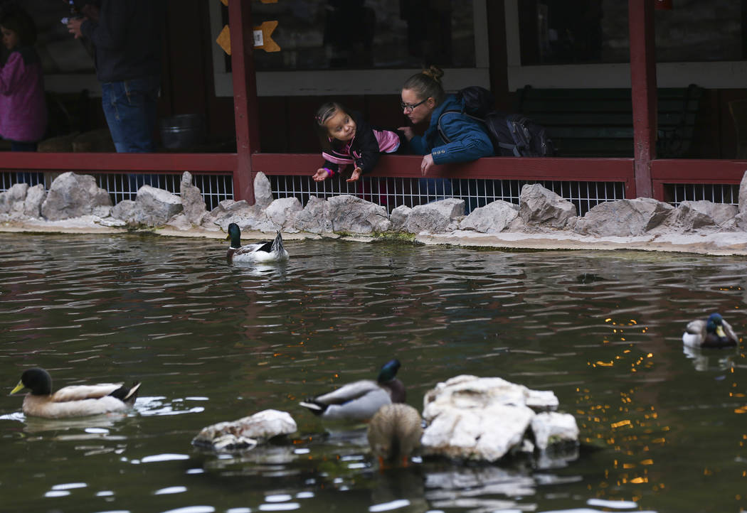 Crystal Conwell, with daughter Riley Standifer, looks at ducks at a pond at Bonnie Springs Ranch outside of Las Vegas on Saturday, Jan. 12, 2019. The ranch is under contract to be sold and demolis ...