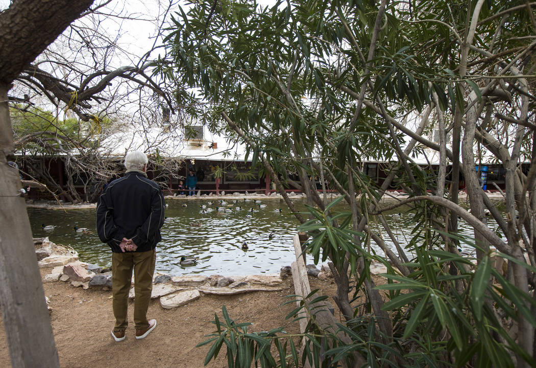 A visitor looks at a pond at Bonnie Springs Ranch outside of Las Vegas on Saturday, Jan. 12, 2019. (Chase Stevens/Las Vegas Review-Journal) @csstevensphoto