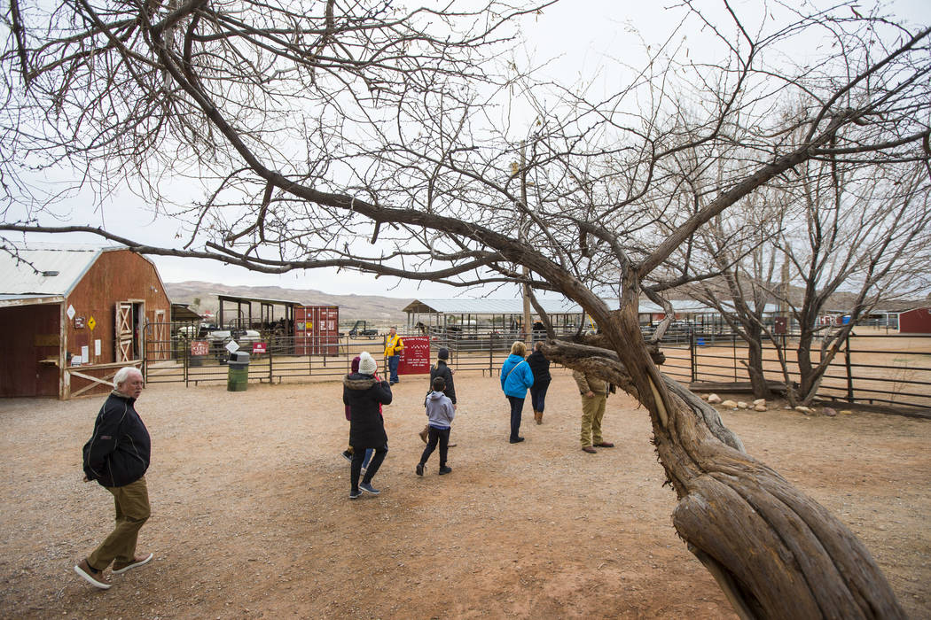 Visitors walk around the Red Rock Riding Stables at Bonnie Springs Ranch outside of Las Vegas on Saturday, Jan. 12, 2019. (Chase Stevens/Las Vegas Review-Journal) @csstevensphoto