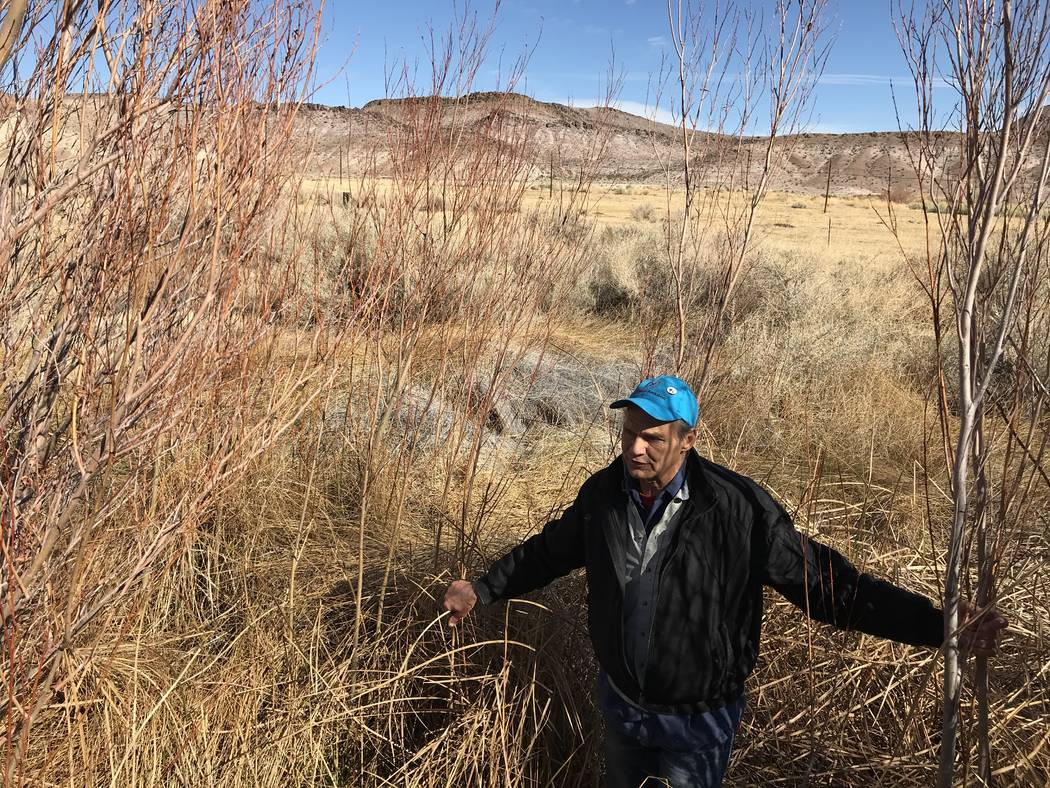 Len Warren from the The Nature Conservancy stands in the waist-high grass at the organization's Torrance Ranch Preserve north of Beatty on Feb. 8, 2019. Henry Brean Las Vegas Review-Journal