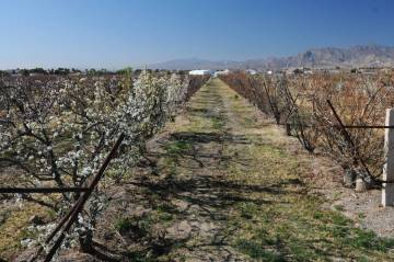 Erik Verduzco/Las Vegas Review-Journal Approximately $250,000 is expected to be awarded to projects that will enhance the competitiveness of Nevada's specialty crops.