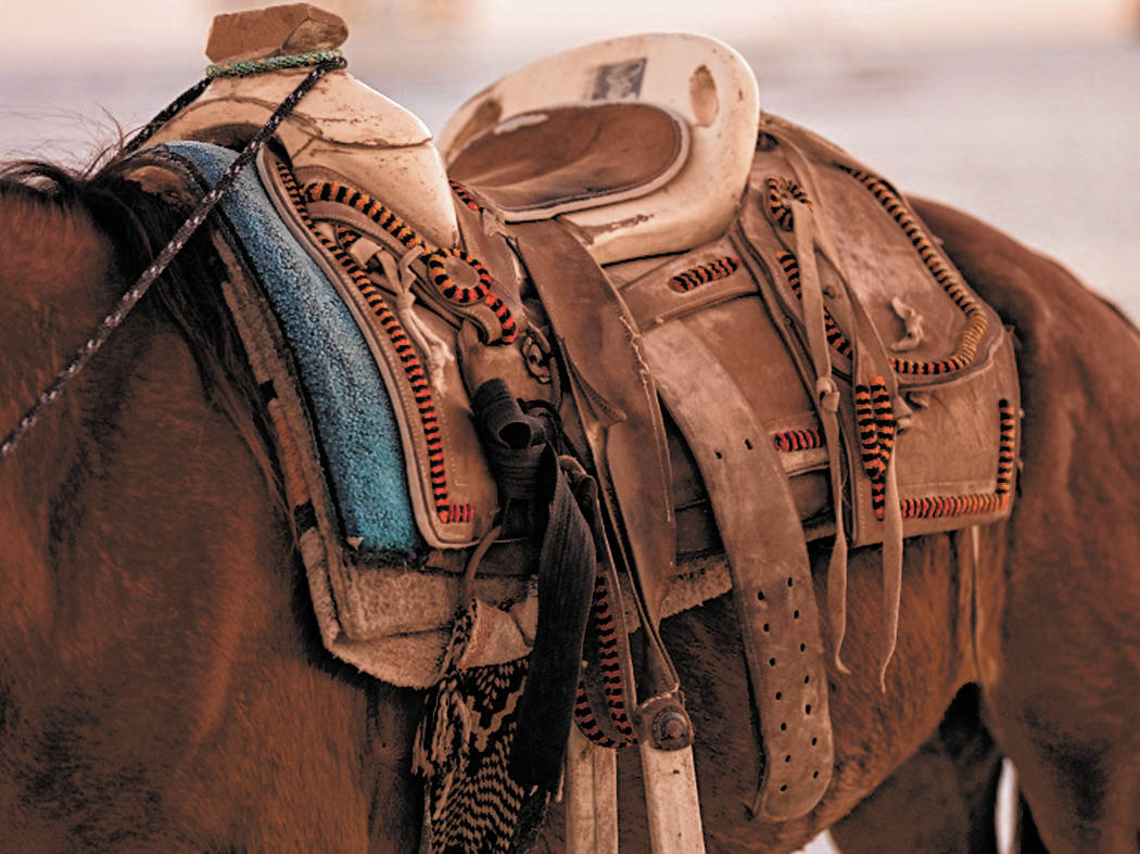 Horse and saddle