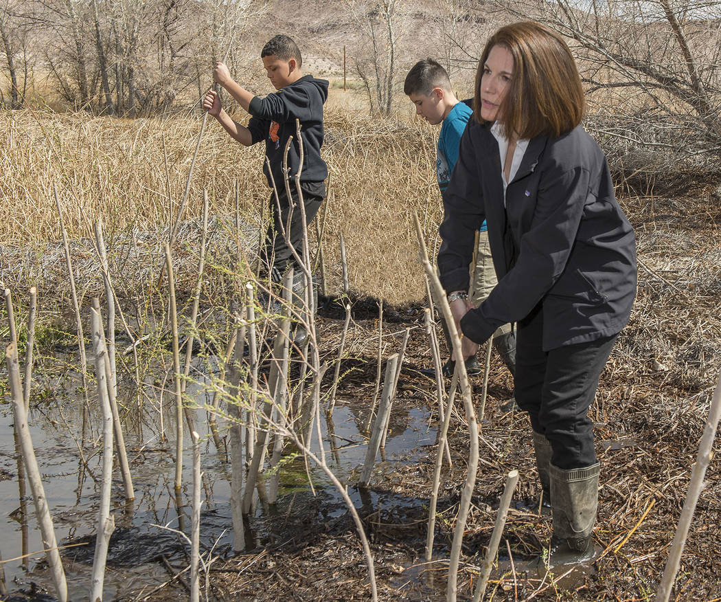 Chip Carroon / Special to the Pahrump Valley Times Senator Catherine Cortez Masto plants willow ...