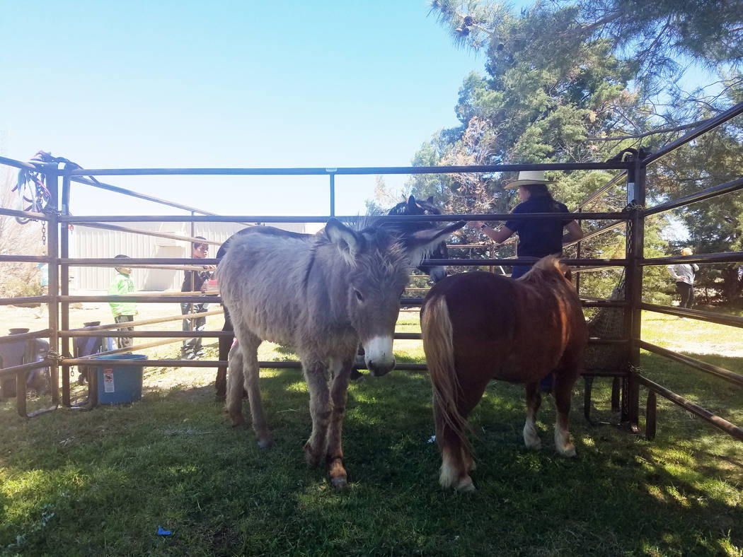 Deberra Mendyk/Special to the Pahrump Valley Times The Bureau of Land Management set up burro ...