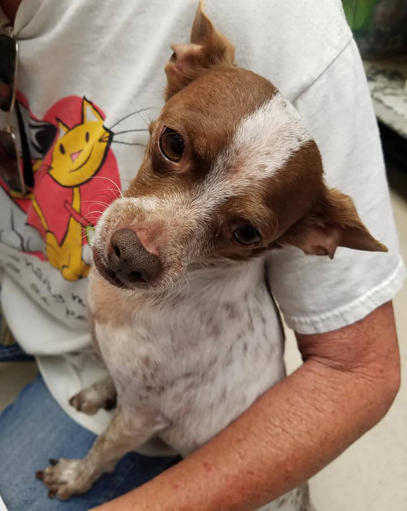 Special to the Pahrump Valley Times Pepper the dog has been at Desert Haven Animal Society sinc ...