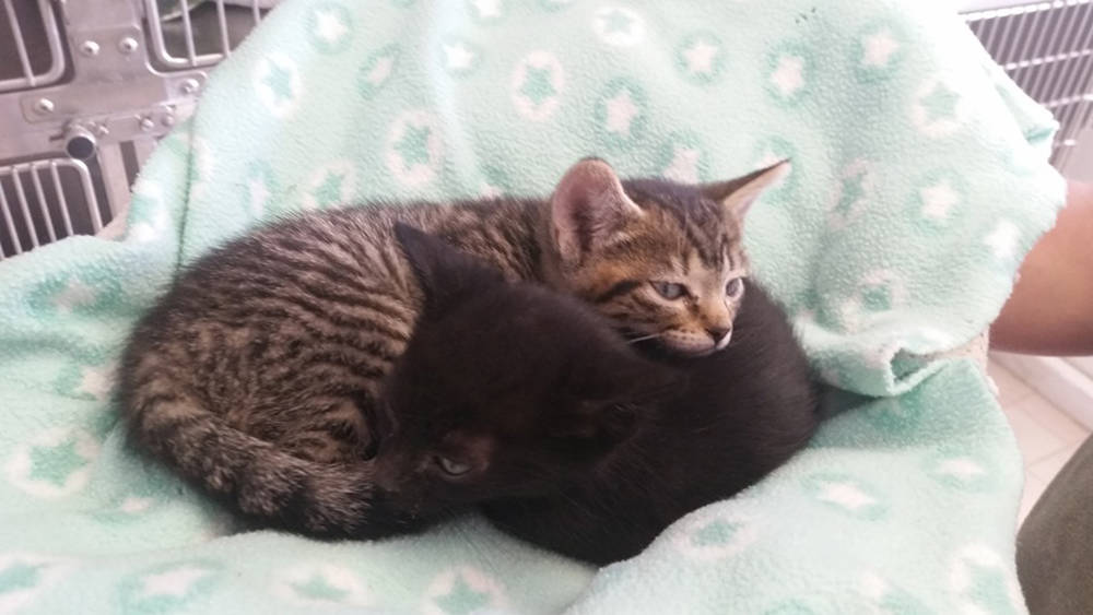 Special to the Pahrump Valley Times The adorable kittens shown here are also in need of loving ...