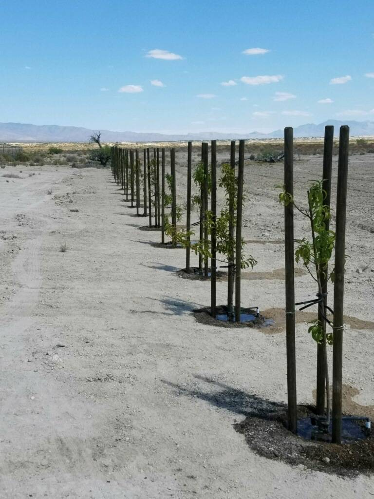 Sheri's Ranch Over 100 trees have been planted at Sheri's Ranch's on-site community orchard. Th ...