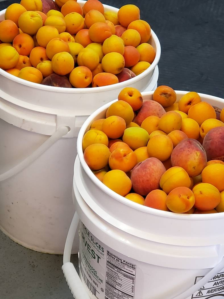 Sheri's Ranch Sheri's Ranch recently donated a variety of fresh fruit to the Pahrump Community ...